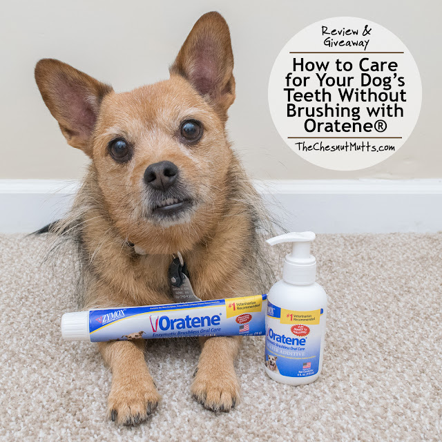 Review & Giveaway: How to Care for Your Dog's Teeth Without Brushing with Oratene®