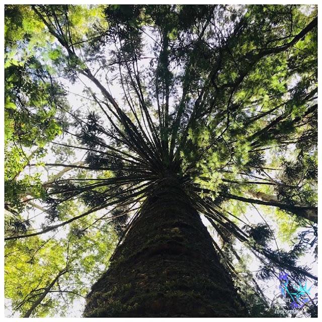 නුවරඑළියේ සැගවුණු වනාන්තරය - ගැල්වේස් ලෑන්ඩ් 🌳🌴🍀☘️🌿🍃 (Galway's Land National Park) - Your Choice Way