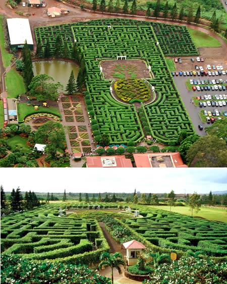 Labirin di Hawai: http://id.faktaunik.dorar.info/