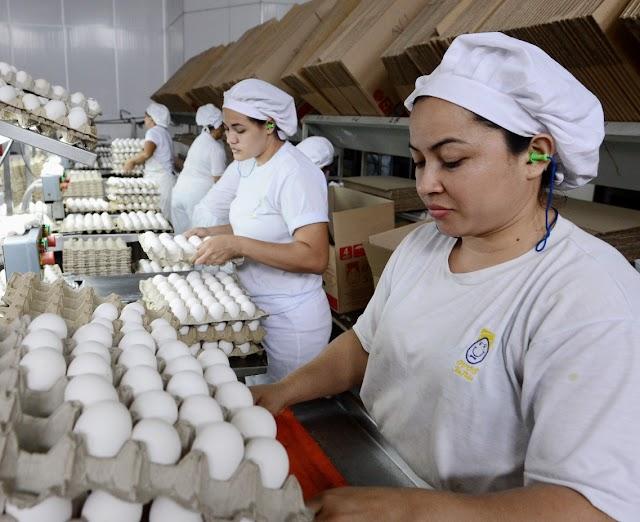 Em três meses, Amazonas produziu 154 milhões de ovos