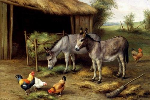 Eşekler ve tavuklar