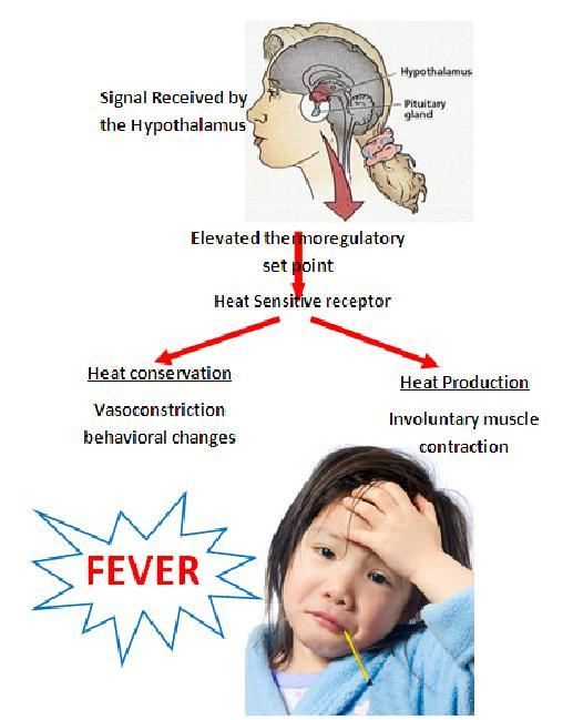N204Group5: Diagram of Fever's role in Infection and