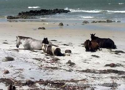 Denunciam: Cavalos soltos na praia de Ponta de Pedras