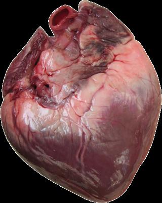 Homem come coração assado com cachaça