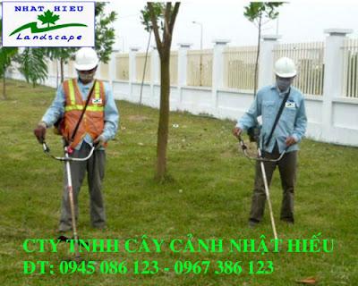 Dịch vụ cắt cỏ thuê