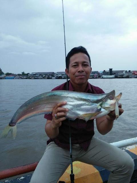 Berbagai Ikan Besar di Sungai Kapuas