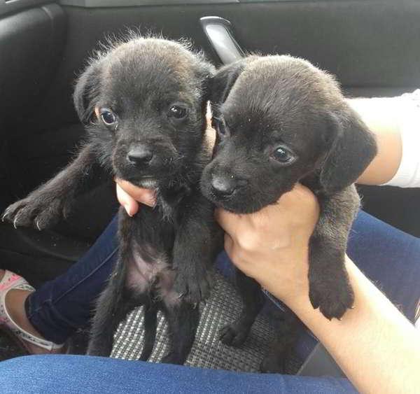 cachorros de tamaño pequeño mediano