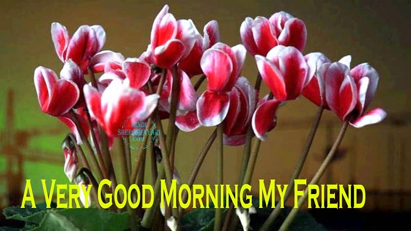 Good Morning Greetings With Cyclamen Flowers