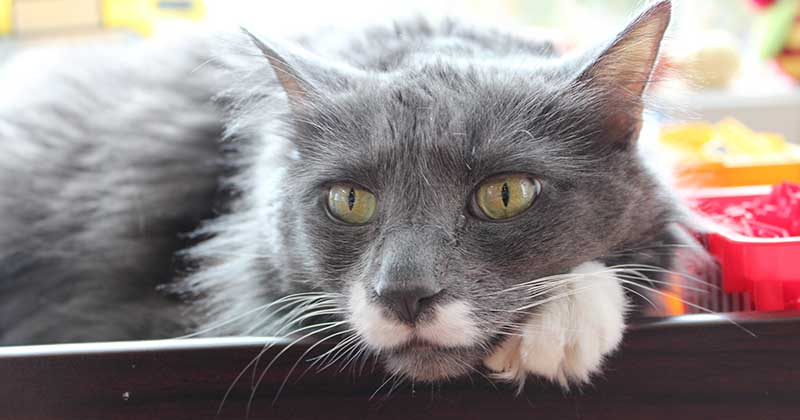 Why Adopting a Senior Pet is the Best for Your Family #HillsTransformingLives