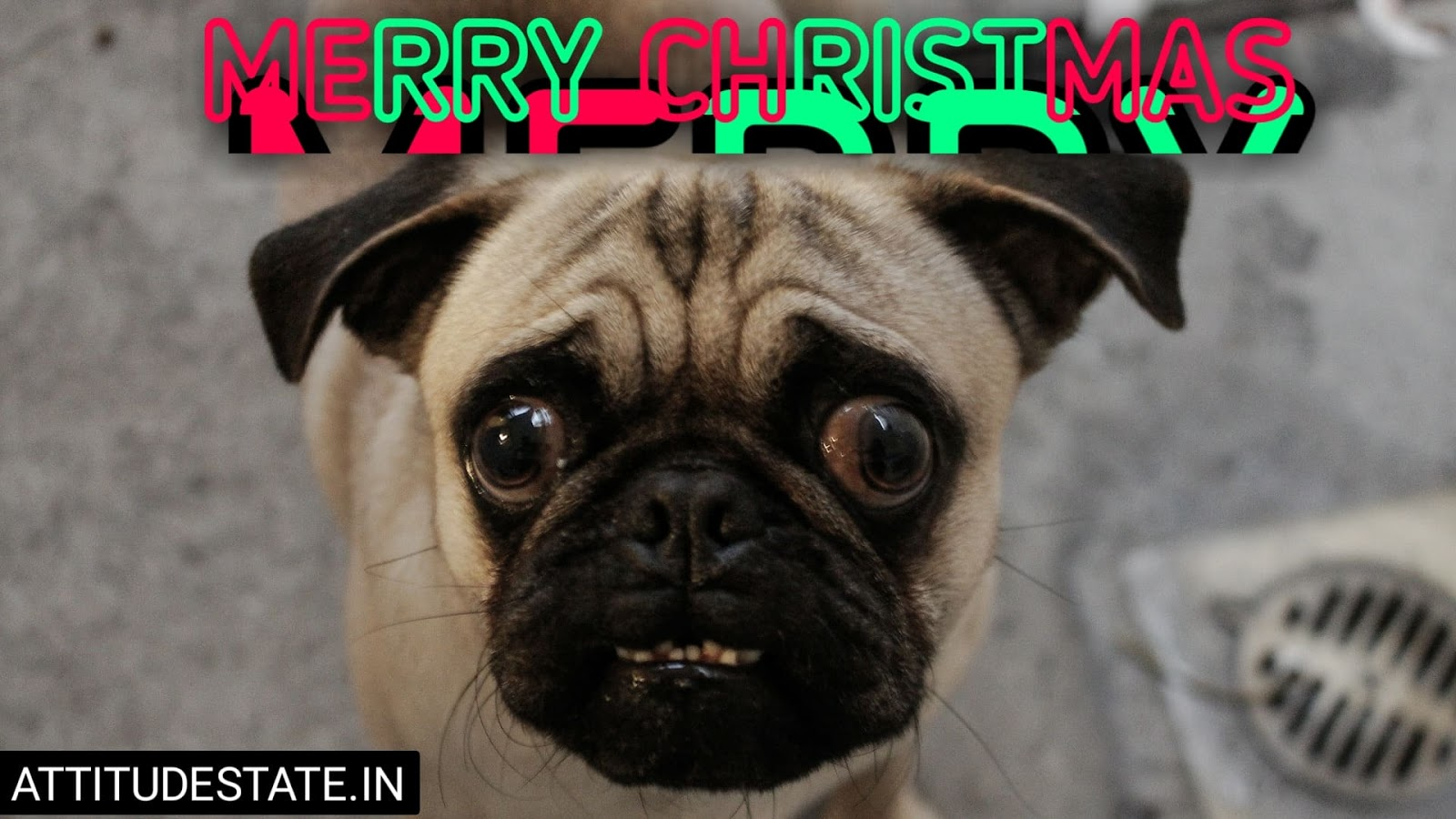 funny best merry christmas wishes