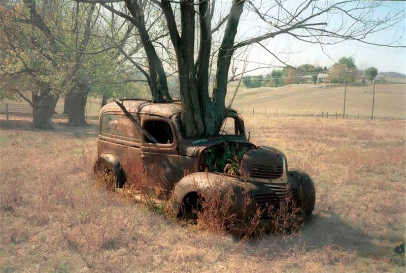 Trees Growing Through Classic Cars
