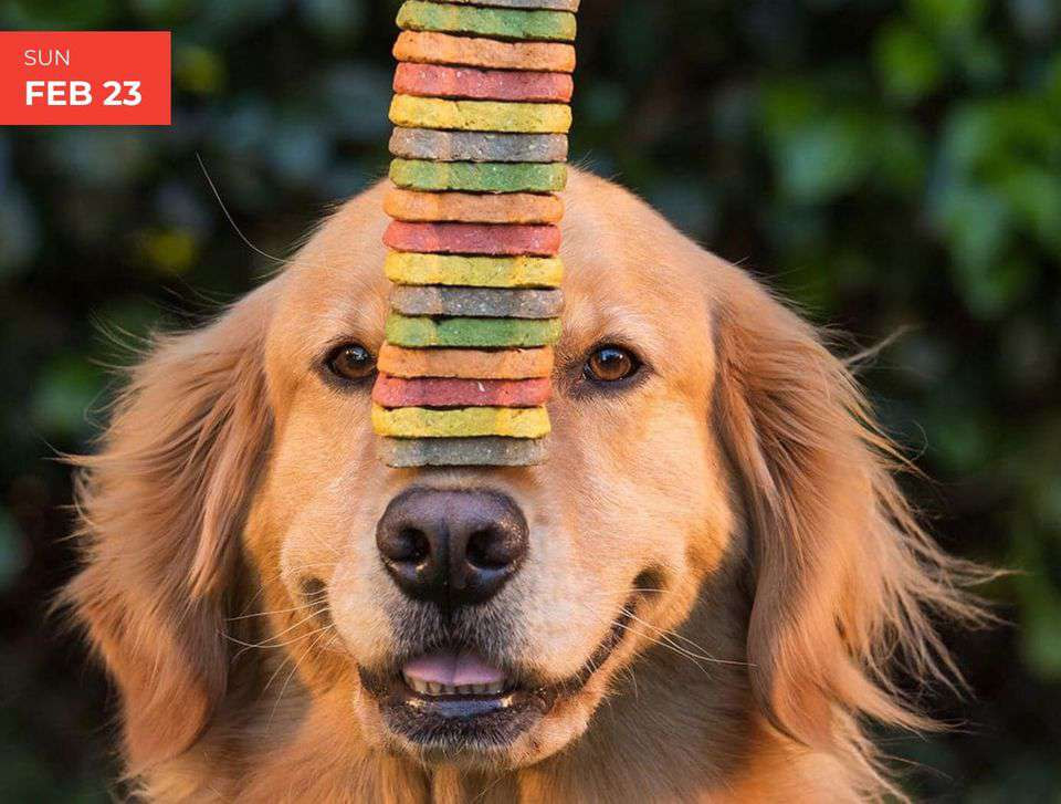 International Dog Biscuit Appreciation Day Wishes Images
