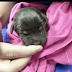 Owner Was Set On Putting Newborn Puppy Down Yet Veterinarian Tech Would Not Permit It