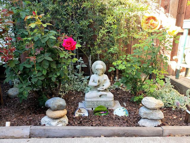 my sister Patti's memorial rose garden
