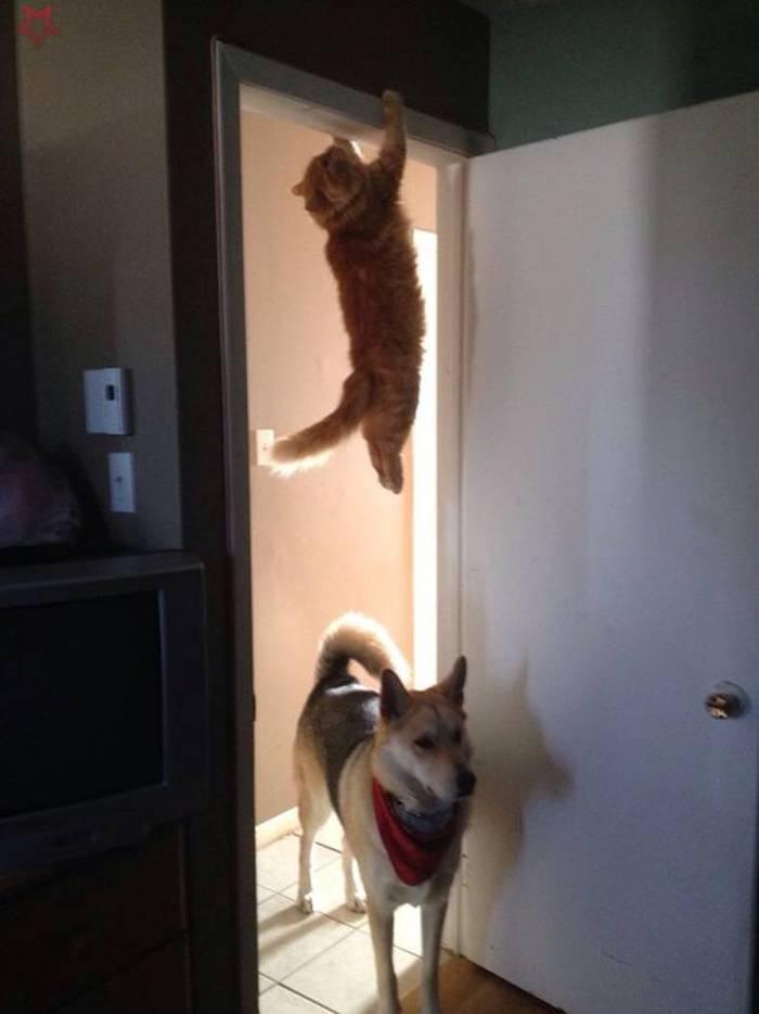 حيوانات مشاغبة ,قطط مشاغبة ,,قطط مشاغبة ,قطط مضحكة 2019,قطط مضحكة,قطط تجعلك تضحك