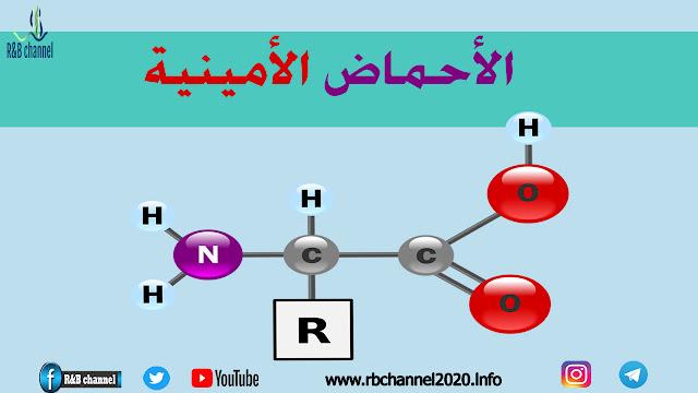 الأحماض الأمينية | أنواعها - أهميتها