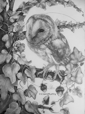 Wildlife Sketch: Sketching a Barn Owl. Sussex. London