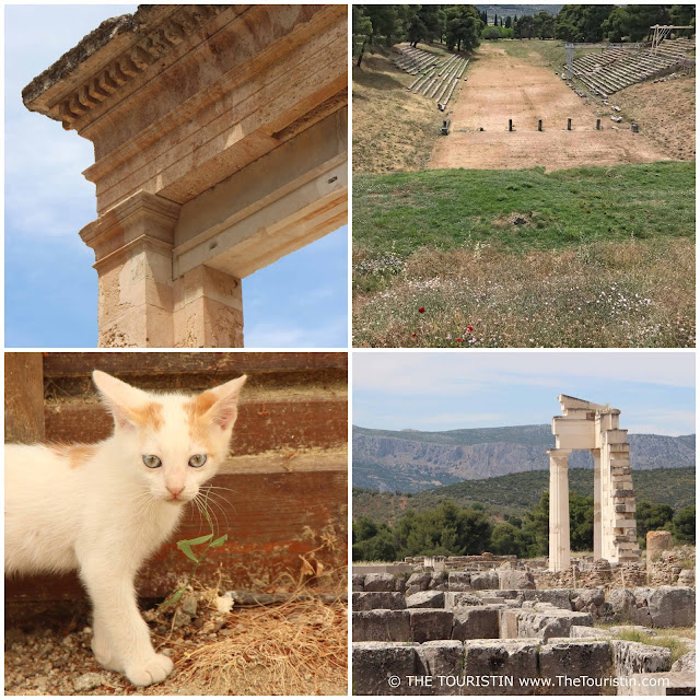 Baby cat and pillars and remains of the Epidaurus temples in Greece.