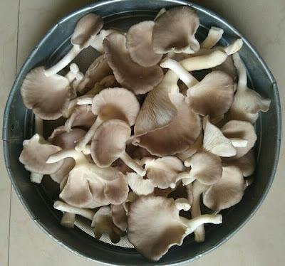 Scope of Mushroom Business in Gujarat