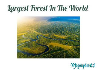Top 10 Largest Forest In The World - Mysterious World