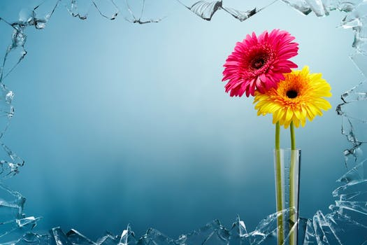 Beautiful Flower Wallpapers In Hd 4k And 1080p For Desktop And