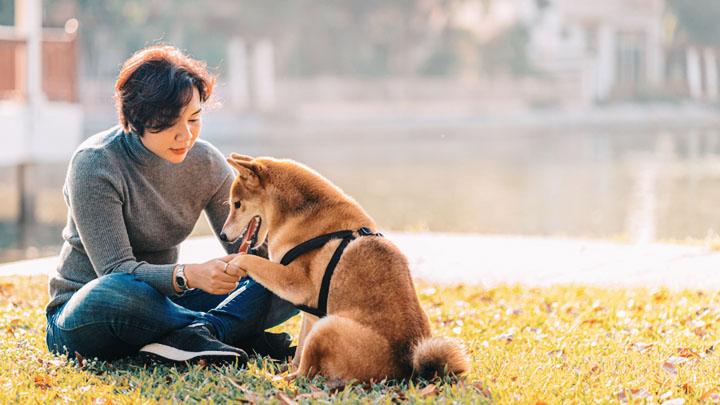 service dog commands