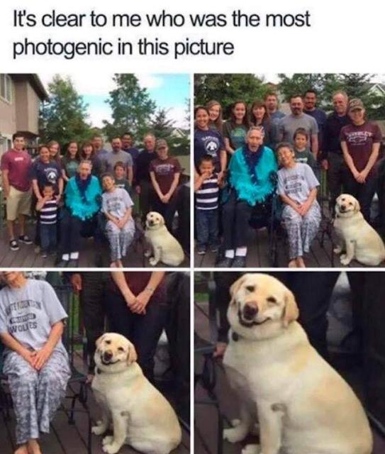 Photogenic good boi