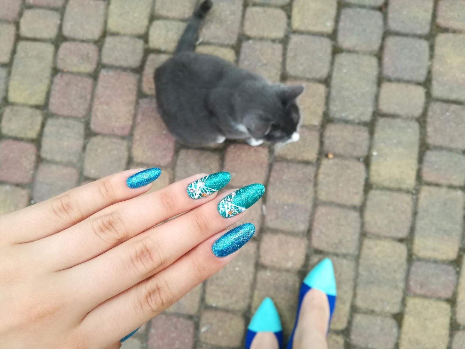 niebieskie hybrydy i kot