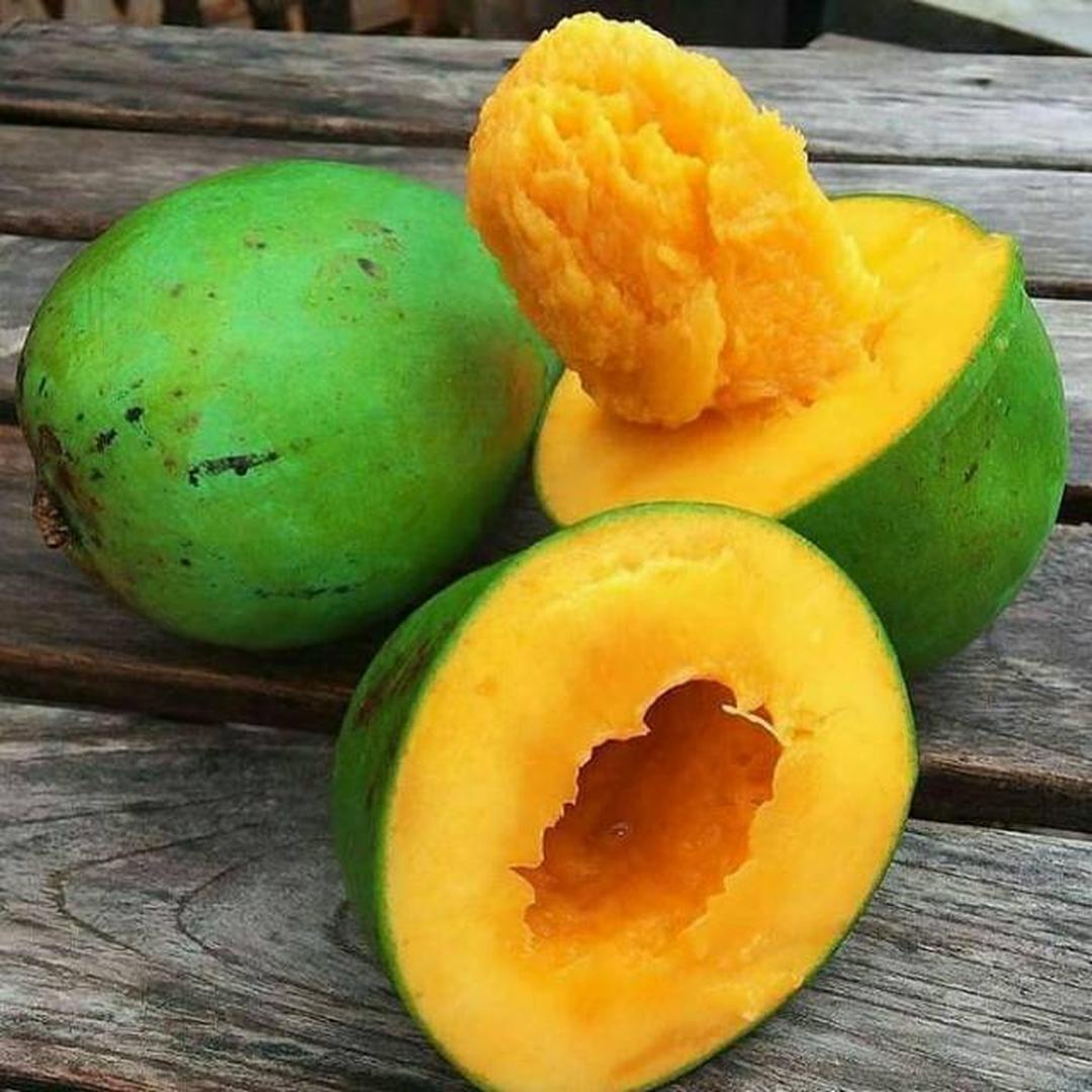 Murah Meriah! Bibit buah mangga alpukat Kota Bekasi #bibit buah langka