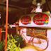 Snap Happy At Maria's Kitchen, Allen, Northern Samar