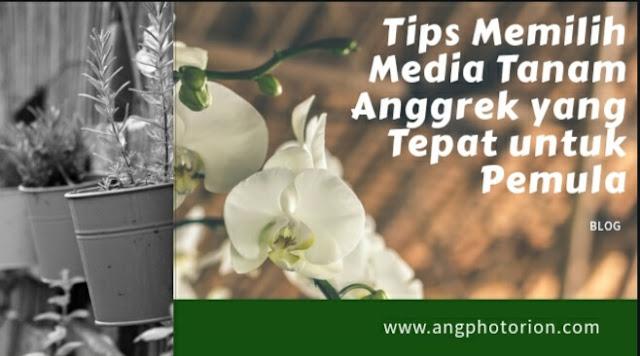 Media Tanam Anggrek yang cocok dan mudah digunakan