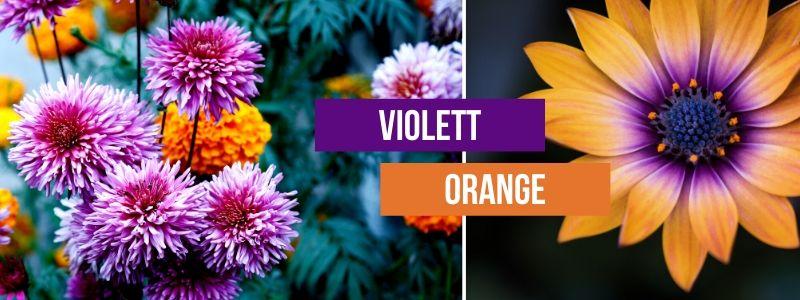Violett-Orange-Kombinieren