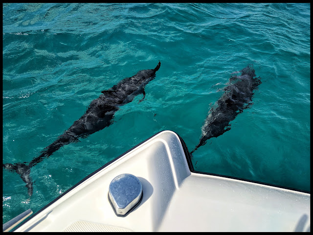 Pod of Dolphins off Kauai Coast - Smaller Spinner Dolphins which are more agile very community oriented.  In Fact they don't survive when removed from their pod.