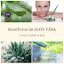 Os incríveis benefícios da Aloe Vera, também conhecida popularmente como babosa.