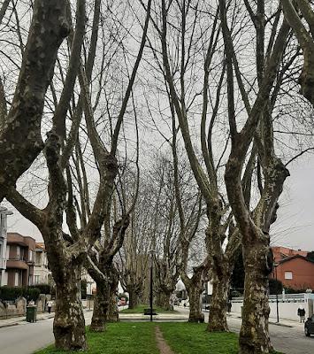 árvores no canteiro central da avenida