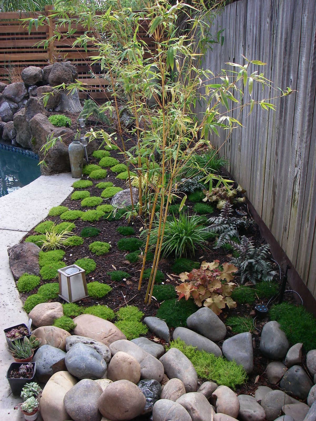 Japanese Rock Garden Ideas Bamboo Geek How Fast Will My Bamboo Grow Photos Over