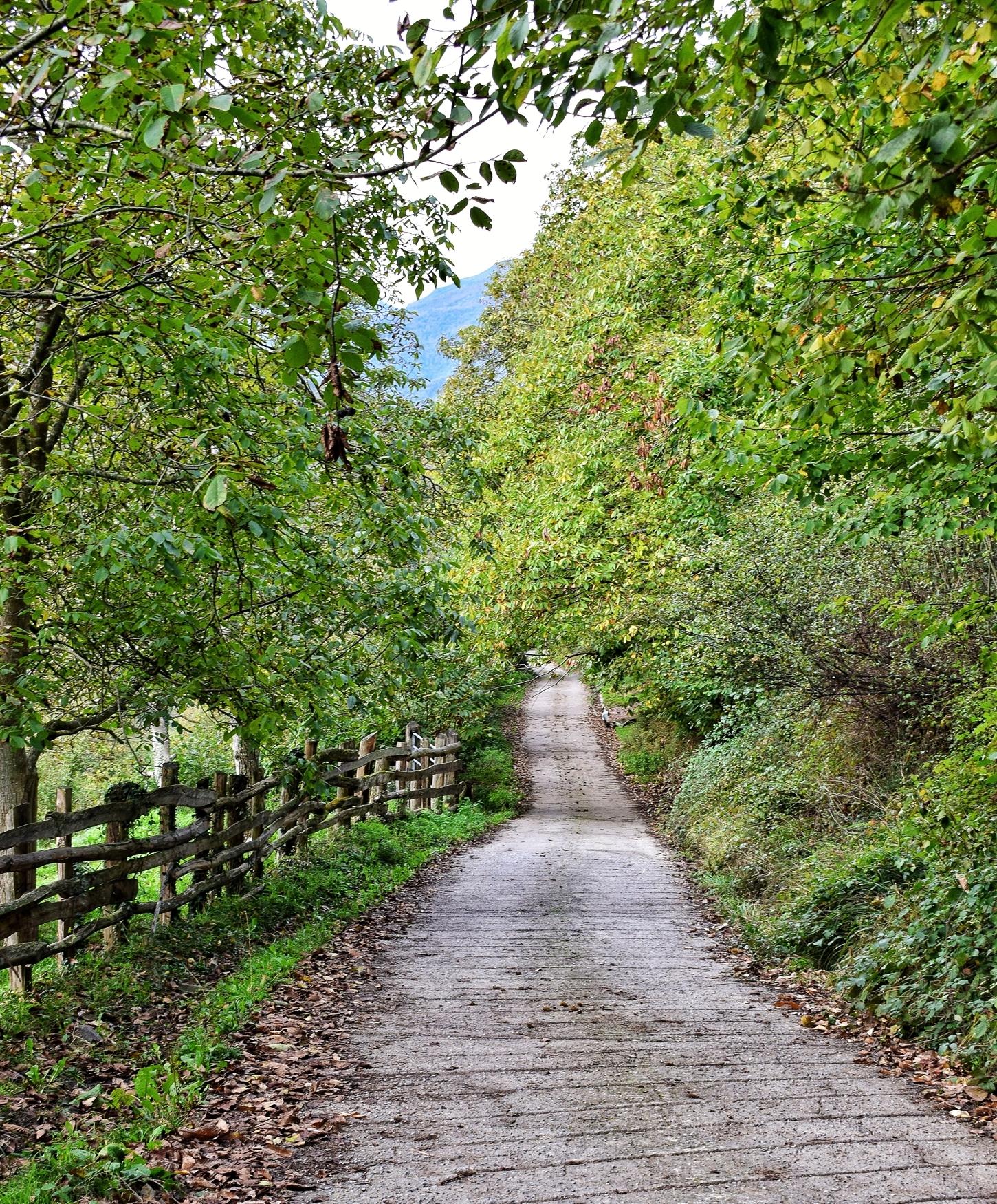 camino pista hacia el pinganon