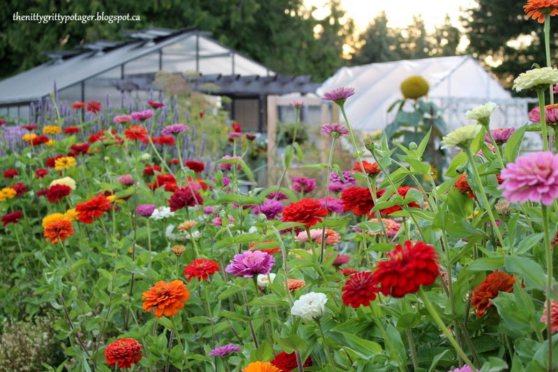 Grow Food with Flowers