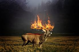 THE BURNING FOREST-A CLIMATIC FURRY?