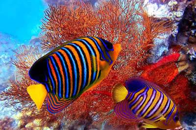 Jenis Ikan Laut Lengkap Beserta Gambar Sungaidanau Com
