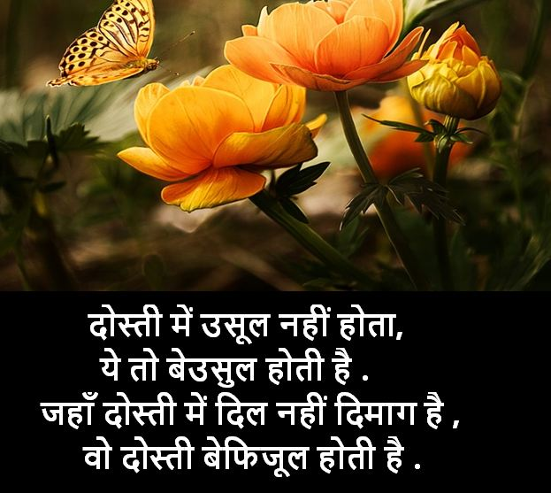best shayari image collection, best shayari images download