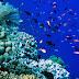 Arti penting terumbu karang bagi biota laut dan manusia