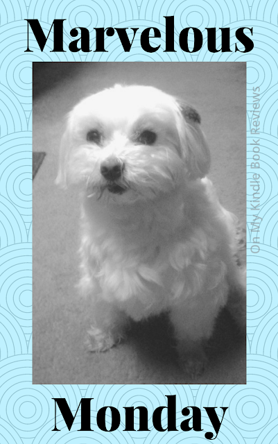 Marvelous Monday, Lexi The Maltese, On My Kindle Book Reviews
