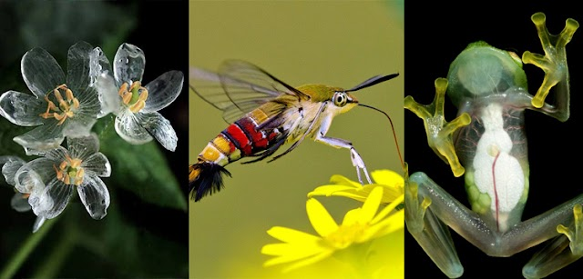 Nature abounds in many magical creatures: Here are Six Creatures you Can See Through their Bodies