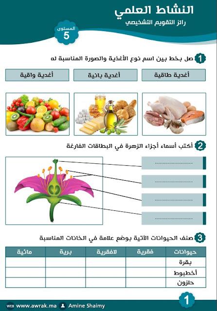 نموذج تقويم تشخيصي النشاط العلمي المستوى الخامس