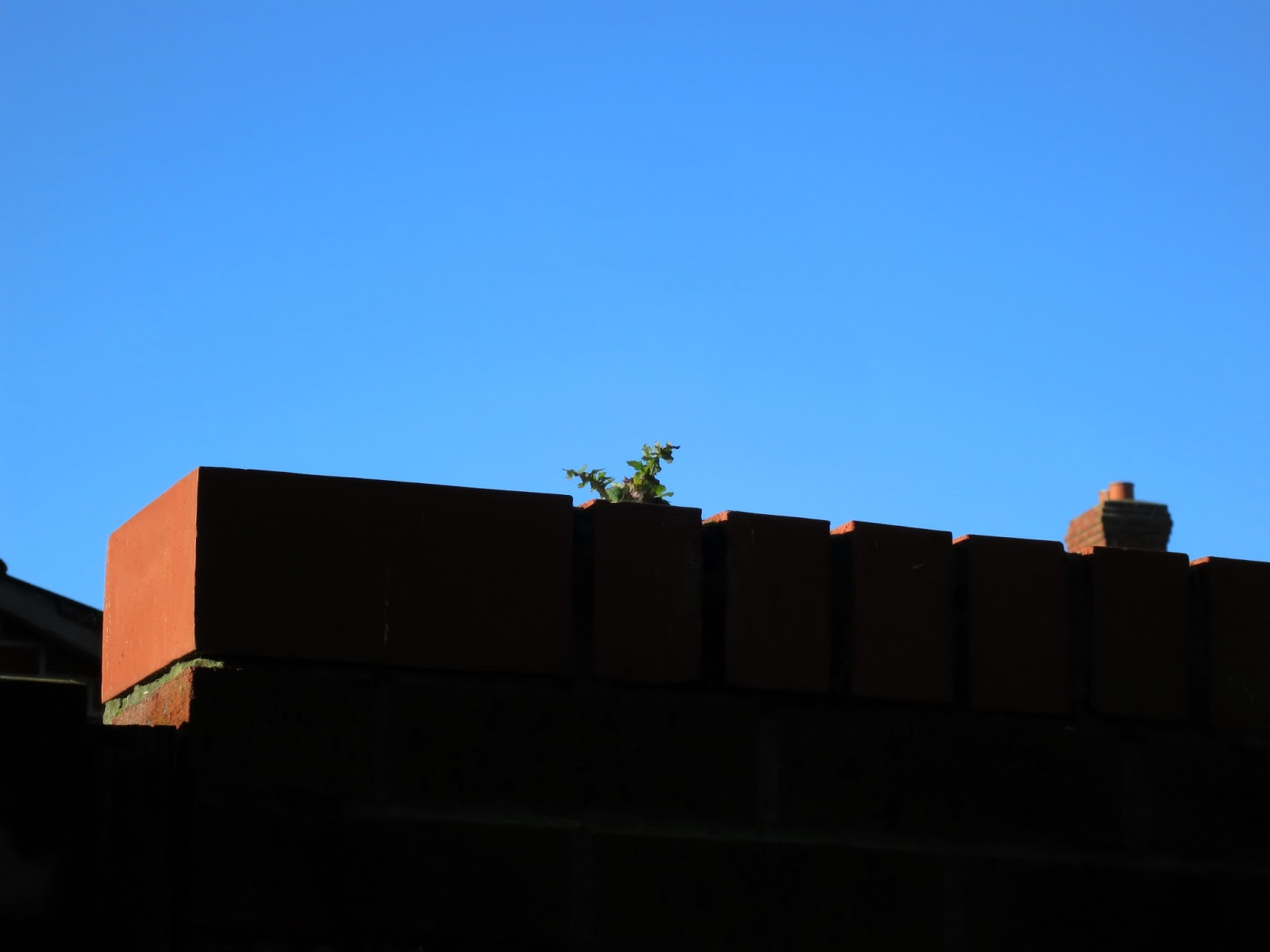 Plant growing on top of brick wall