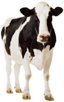 cow image ok for reuse