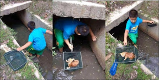 Tindakan Mulia! Bocah Ini Selamatkan Kucing Yang Terjebak di Selokan
