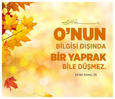 """""""O'nun bilgisi dışında bir yaprak bile düşmez, En'âm Sûresi, 59, ayet, Kur'an-ı Kerim, yaprak, sonbahar"""