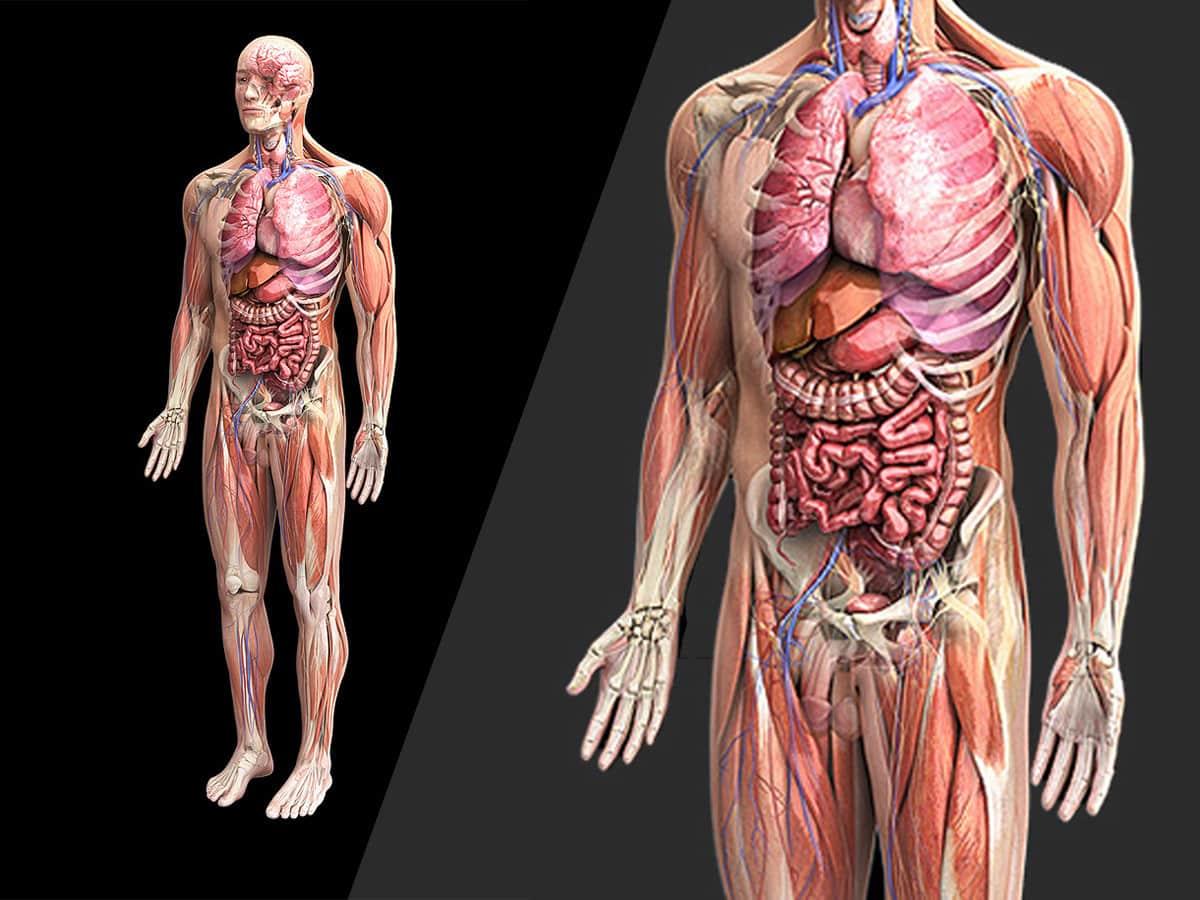 Muhammet Bahadr Ksz Anatomi